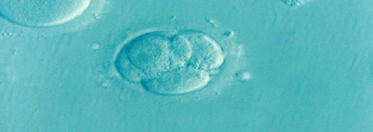 Coronavirus can cause infertility in humans?