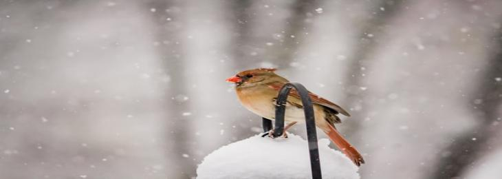 Study Suggest Tiny Birds' Blood Gets Warmer in Winter