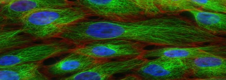 New Study Understands Cells Mechanism to Boost Immunity