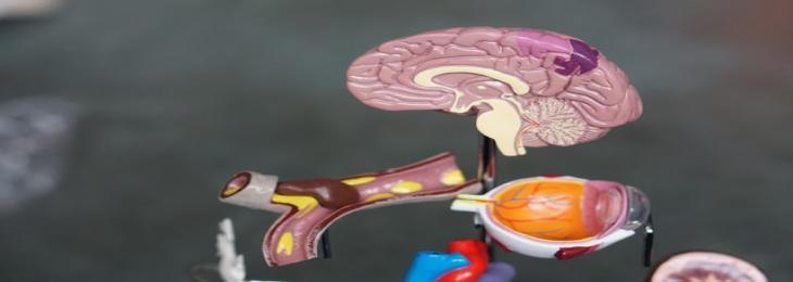 MOGONET offers a comprehensive analysis of biological procedures concerning human diseases
