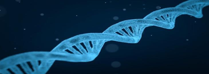 Gene Discovery May Lead To Development Of Drugs To Treat Obesity